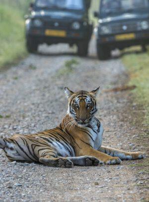 jangla safari_